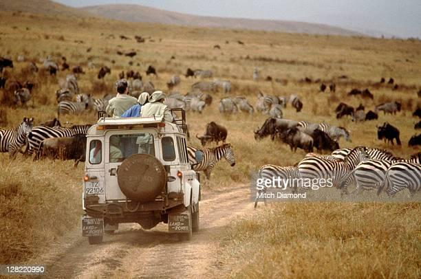 Land Rover on safari, Tanzania