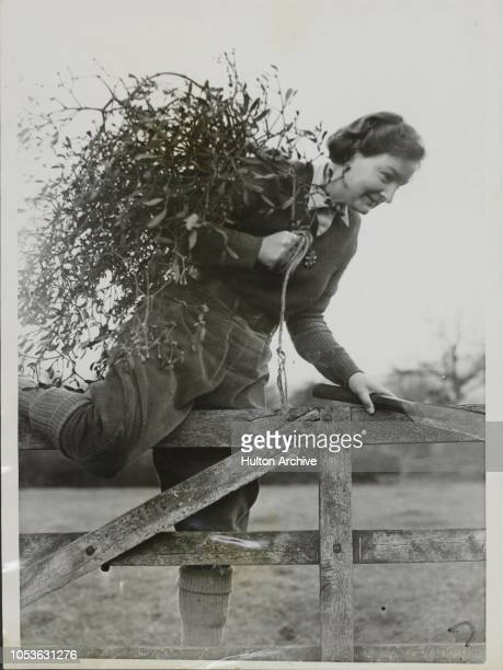 Landgirls Mistletoe The Land Girls will not go short of Christmas Decorations A photograph taken at Bishops Cleeve Gloucestershire Bishops Cleeve...