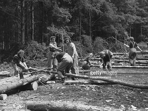 Landgirls of the Timber Corps cut down wood that will go to make much needed pit props.