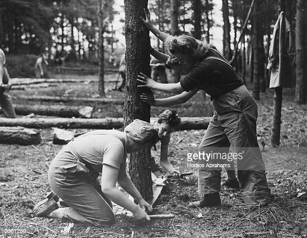 Landgirls of the Timber Corps fell a tree in a forest near Bury St Edmunds. The wood from the trees that they cut down will go to make much needed...