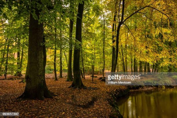 landgoed geijsteren - william mevissen stock pictures, royalty-free photos & images