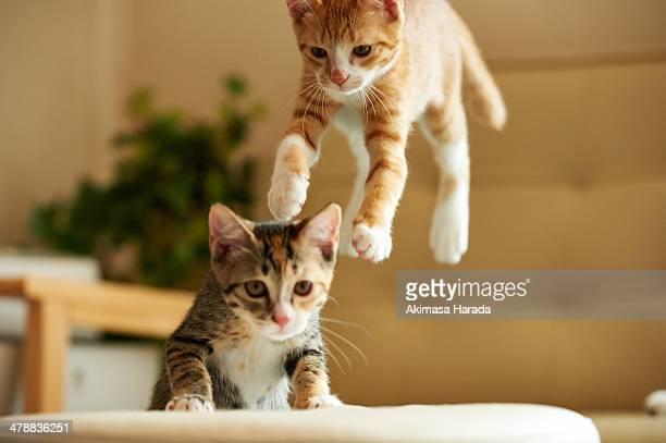 Landing cat and curiosity cat.
