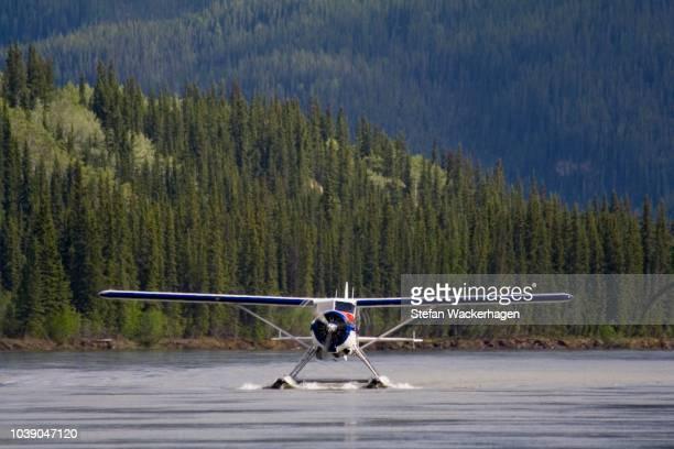 landing float plane, bush plane, legendary de havilland canada dhc-2 beaver, yukon river, teslin river, hootalinqua, yukon territory, canada - beaver stock pictures, royalty-free photos & images