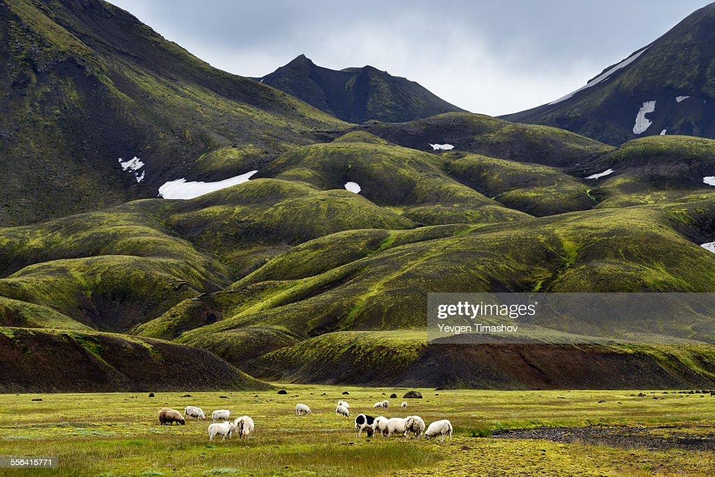 Landmannalaugar, Highlands of Iceland : Stock-Foto