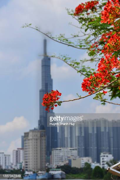 landmark 81 building by the phoenix flower - saigon river stock pictures, royalty-free photos & images