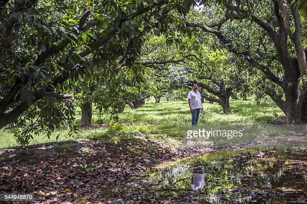 Landowner Kunwar Vikram Jeet Singh stands for a photograph in a mango orchard on his family farm in Kuchesar Uttar Pradesh India on Tuesday May 24...