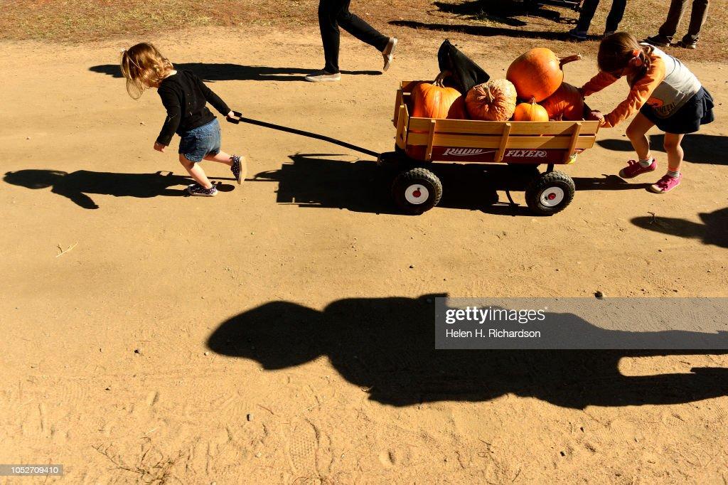 Landry heyman left gets help from her sister lila right - Botanic gardens pumpkin festival ...