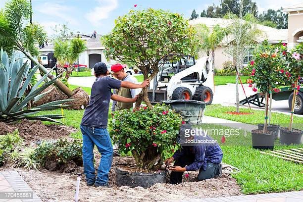 landscaing a front yard - landscaped stock pictures, royalty-free photos & images