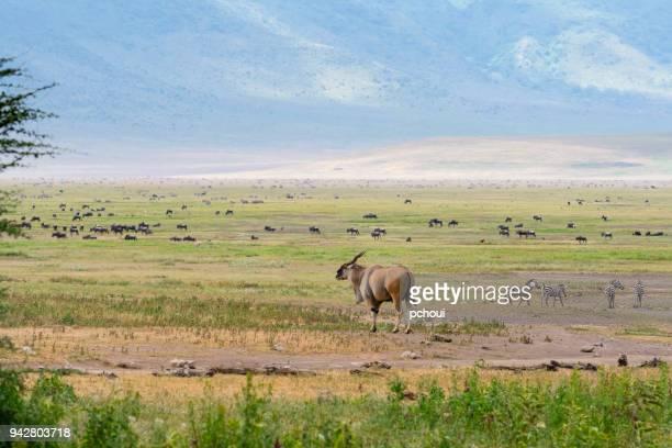 Landscape, Africa, Eland