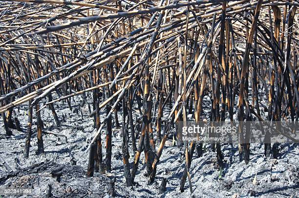 landscape after the fire - after stock photos and pictures