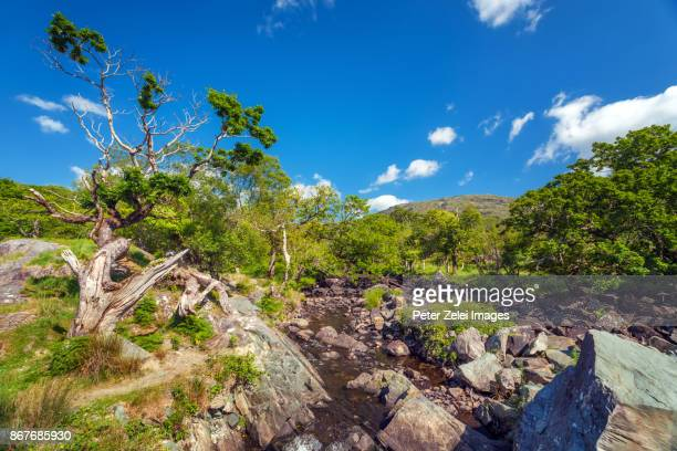 landscape along the ring of kerry, killarney national park, county kerry, ireland - ring of kerry stock photos and pictures