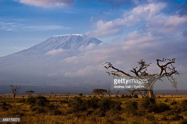 Landscape And Mount Kilimanjaro Against Cloudy Sky