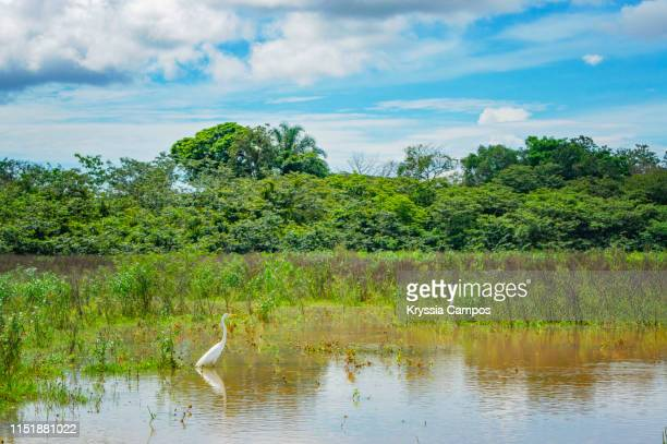 landscape at caño negro wetlands, costa rica - guanacaste stock pictures, royalty-free photos & images