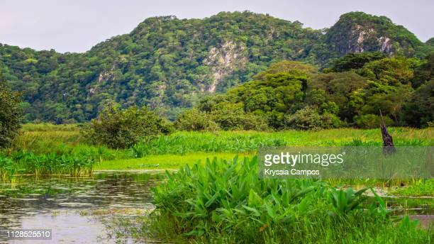 landscape at palo verde national park, costa rica - guanacaste stock pictures, royalty-free photos & images