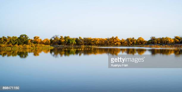 landscape autumn aspen lake reflection - reflection lake stock photos and pictures