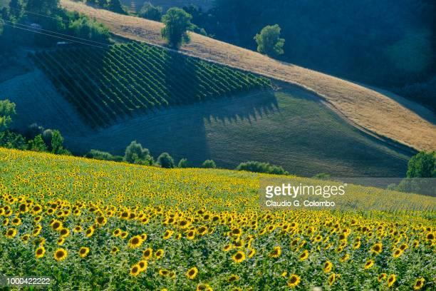 Landscape between Imola and Riolo Terme (Emilia Romagna)