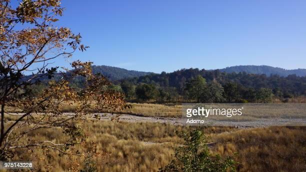 Landscape - Corbett National Park