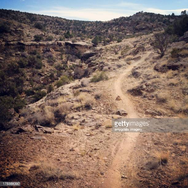 landscape desert recreational trail - western juniper tree stock pictures, royalty-free photos & images