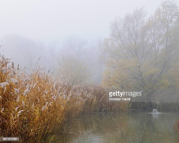 Landscape, fog, Schoenau fish ponds, Schoenau, Lower Austria, Austria, Europe
