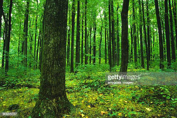 landscape forest green trees - shenandoah_national_park stock pictures, royalty-free photos & images