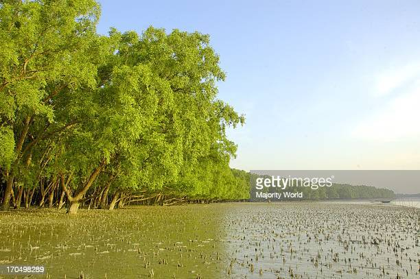 A landscape from Sundarban Sundarban is the largest littoral mangrove forest in the world Sundarban Khulna Bangladesh November 18 2005