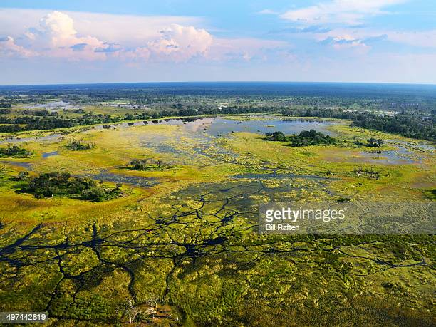 landscape from the air over okavango delta - okavango delta stock pictures, royalty-free photos & images