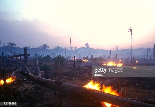 landscape image of a burning forest at dusk - vernieling stockfoto's en -beelden