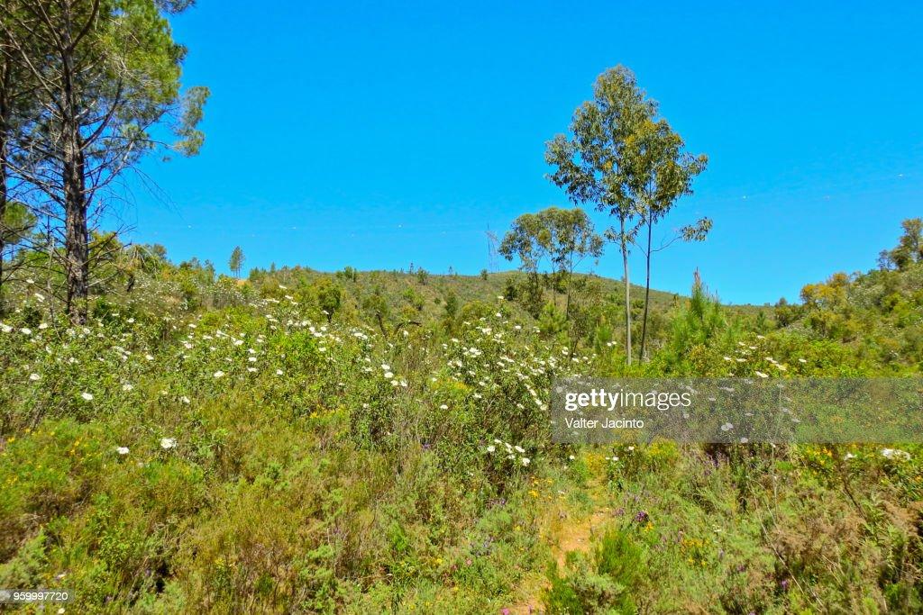 Landscape in Algarve, Portugal: Serra do Caldeirão : Stock-Foto