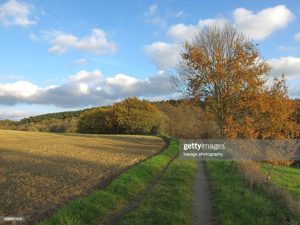 Landscape in autumn : Stock Photo