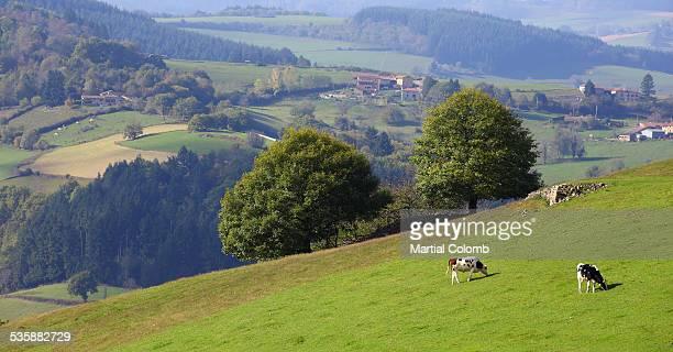 landscape in bourbonnais area - allier stock photos and pictures