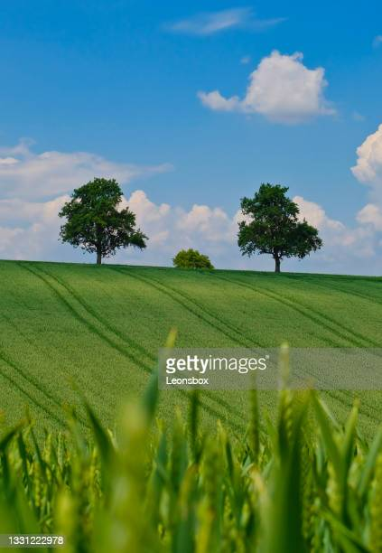 landscape in early summer - baum stock pictures, royalty-free photos & images
