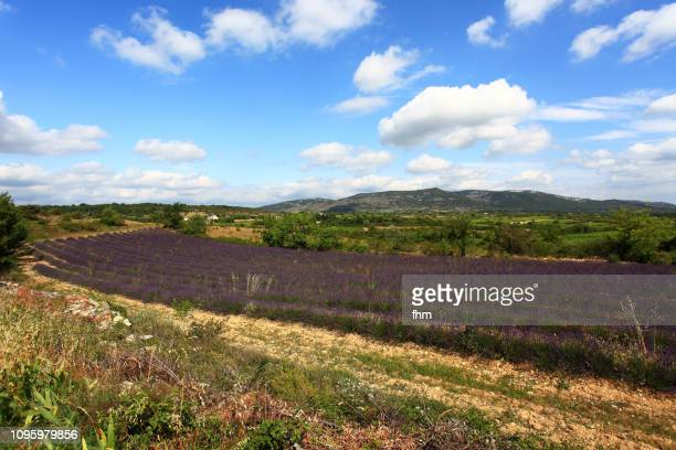 landscape in france with lavender (ardeche, france) - southern europe stock pictures, royalty-free photos & images
