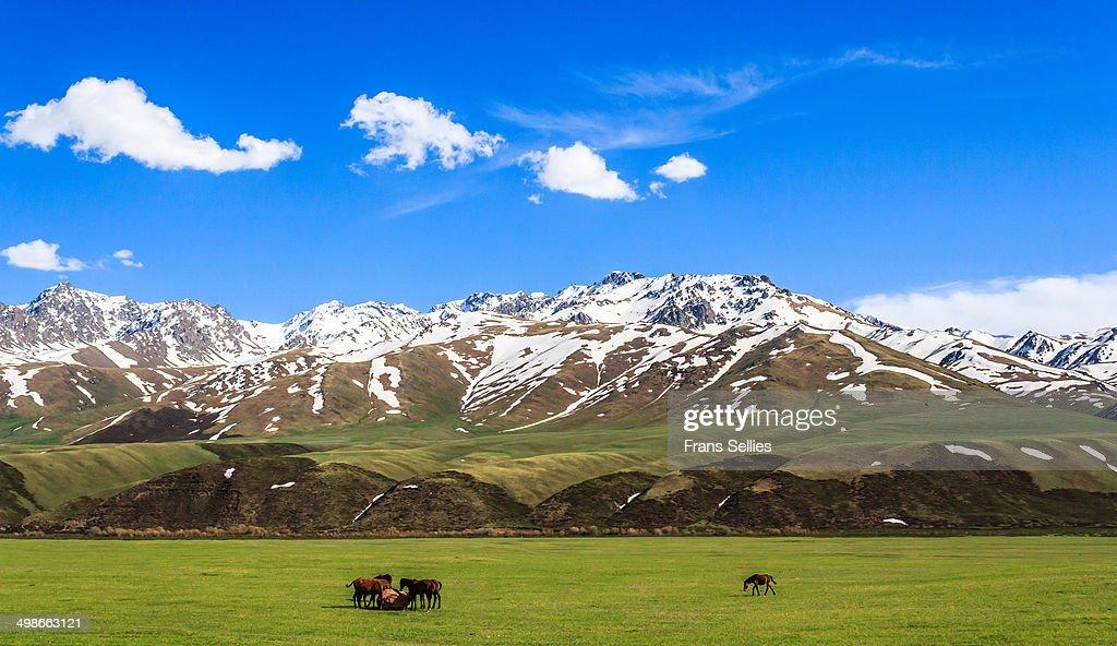 Landscape in Kyrgyzstan : Stockfoto