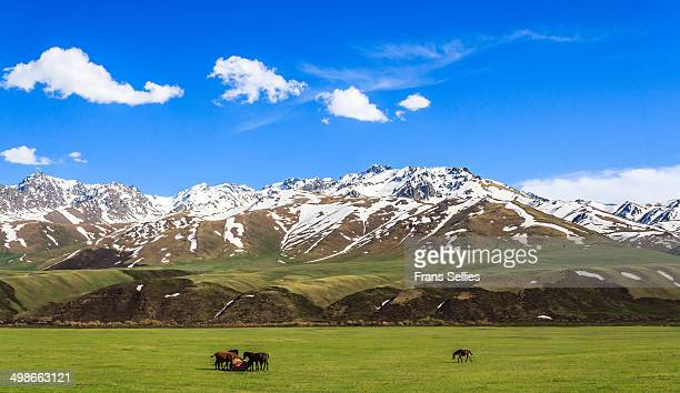 landscape in kyrgyzstan - kirgizië stockfoto's en -beelden