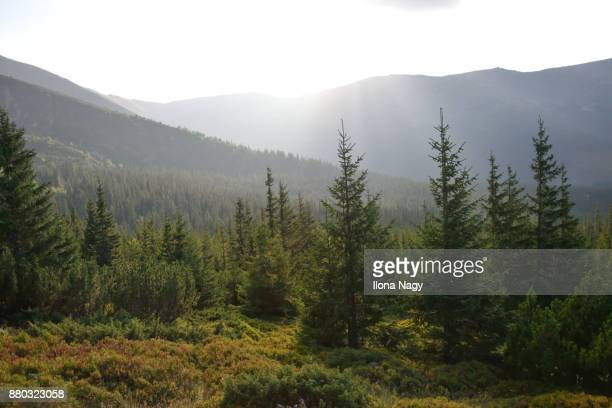 landscape in low tatras national park, slovakia - pine woodland stock pictures, royalty-free photos & images