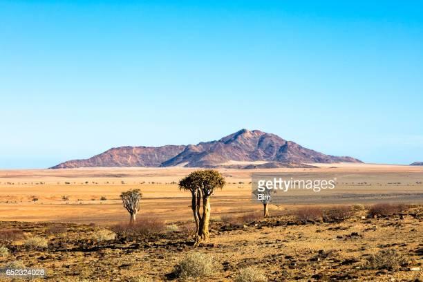 paisaje en namibia - kalahari desert fotografías e imágenes de stock