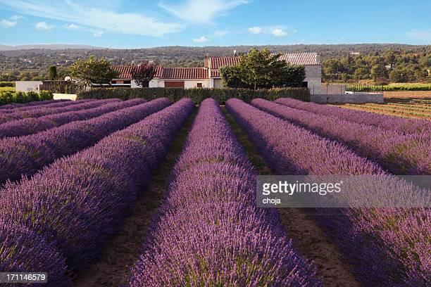 Landscape in Provence...France