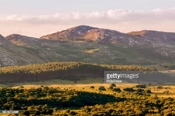landscape in rocha's hills, rural scene, uruguay - uruguay stock pictures, royalty-free photos & images