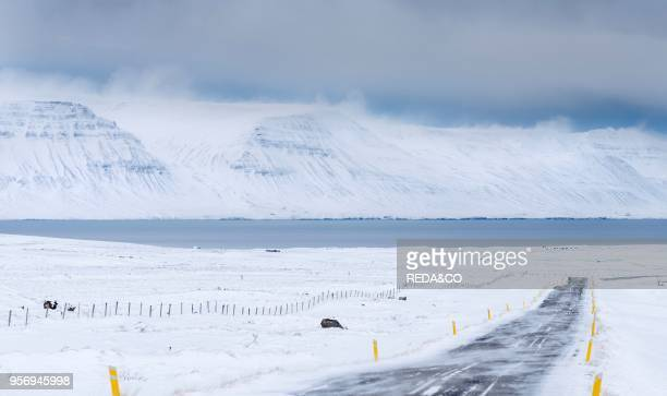 Landscape in Skagafjoerdur during winter view of a snowed in country road with the fjord in the background Europe northern Europe Iceland March