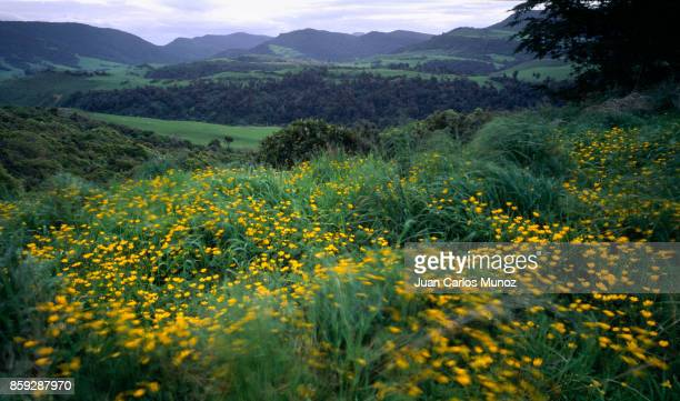 landscape in springtime in catlins, south island, new zealand, oceania - hügelkette stock-fotos und bilder