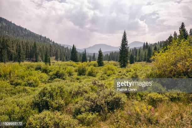 landscape in the buffalo peaks wilderness, colorado - clima alpino foto e immagini stock