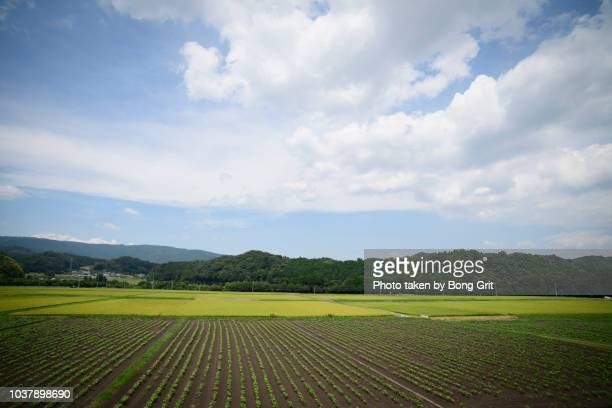 landscape in the countryside - mie prefecture stock pictures, royalty-free photos & images