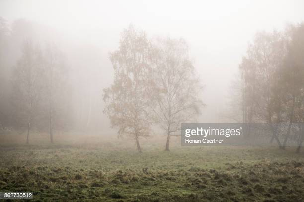 Landscape in the foggy morning near lake Grunewaldsee on October 18 2017 in Berlin Germany