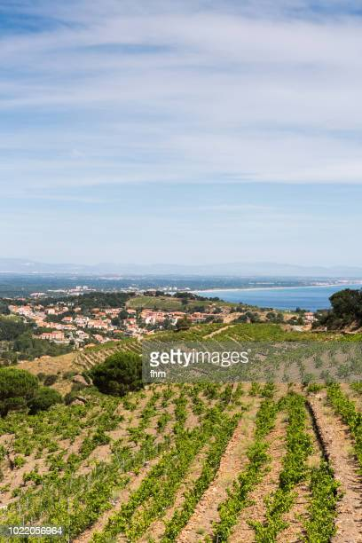 landscape in the vineyards, near collioure/ languedoc-roussillon - languedoc rousillon stock pictures, royalty-free photos & images