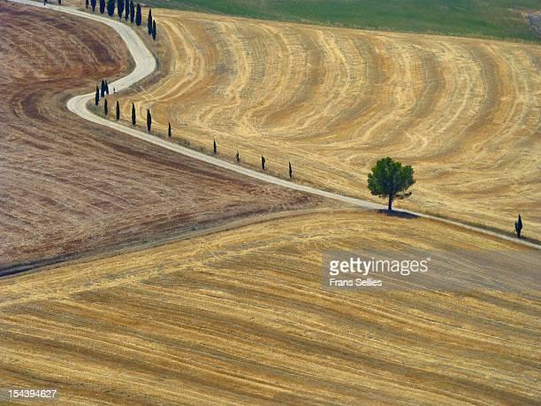 landscape in toscana (tuscany), italy - frans sellies stockfoto's en -beelden