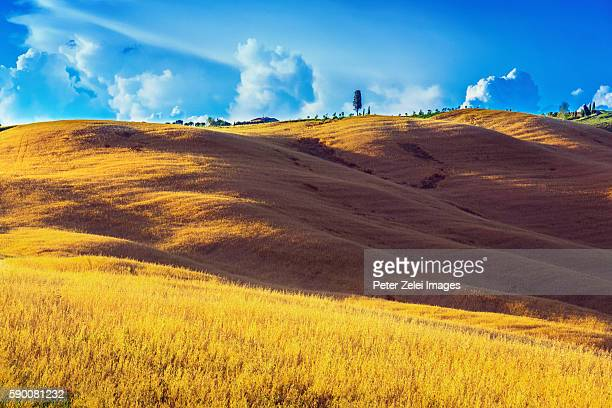 landscape in tuscany, italy - italian cypress stock photos and pictures