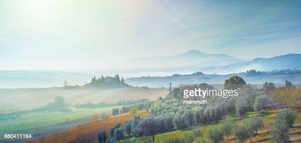 landscape in tuscany, italy with vineyard and olive tree plantation - siena italy stock photos and pictures