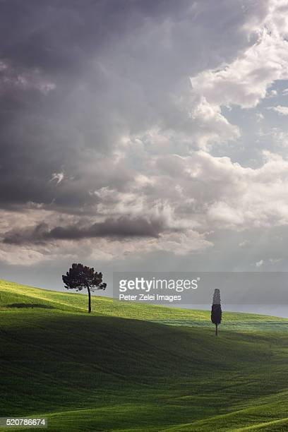landscape in tuscany - italian cypress stock photos and pictures