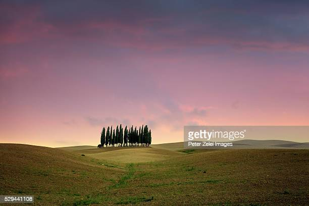 landscape in tuscany with cypress grove at dusk - italian cypress stock pictures, royalty-free photos & images
