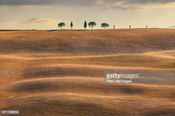 Landscape in Tuscany with cypress trees